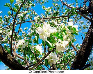 fleurs blanches, branche arbre