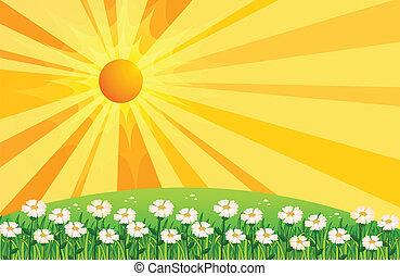 fleurs blanches, jardin, au-dessus, collines