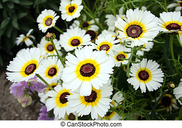fleurs blanches, jardin