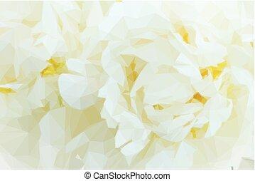 fleurs blanches, pivoine