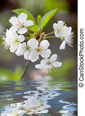 fleurs blanches, refléter, dans, eau