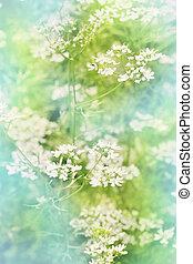 fleurs blanches, teinté, cilantro