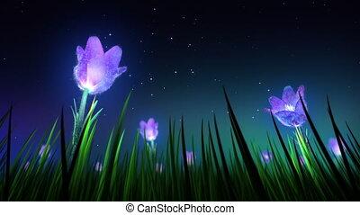 fleurs, boucle, nuit