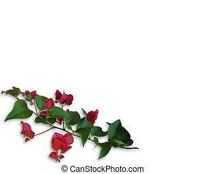 fleurs, bougainvillea, exotique