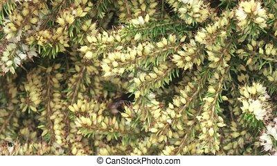 fleurs, bourdon