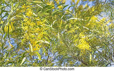 fleurs, buisson, canisse, scène, australien