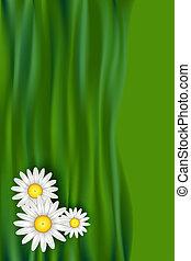 fleurs, camomille, cadeau, espace, texte, couverture, livre, conception, copie, bannière, ou, carte