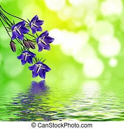 fleurs, campanules