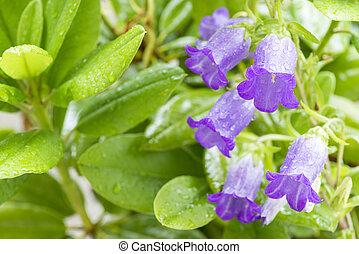fleurs, canterbury, cloches
