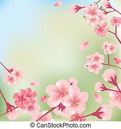 fleurs cerise, fond