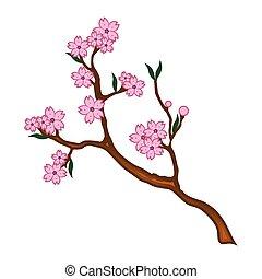 fleurs cerise, illustration, branche