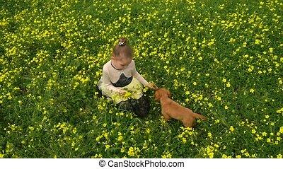 fleurs, champ jaune, jolie fille, chiot, cueillette