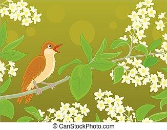 fleurs, chant, rossignol, branche