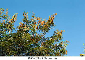fleurs, ciel bleu, arbre, fond, orange