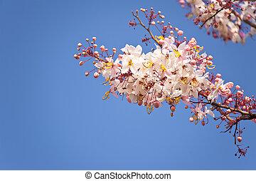 fleurs, ciel bleu, fond, printemps