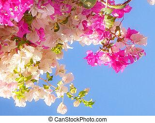 fleurs, ciel bleu, fond, rose, blanc