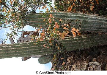 fleurs, ciel, couldy, fond, orange, cactus