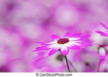 fleurs, coloré, printemps