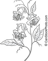 fleurs, contour, kobe