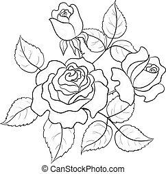 fleurs, contours, roses