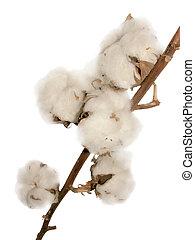 fleurs, coton