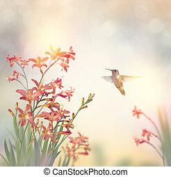 fleurs, crocosmia, colibri