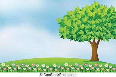 fleurs, dans, les, colline
