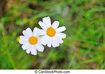 fleurs, deux