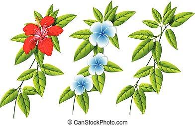 fleurs, différent, ensemble, feuilles