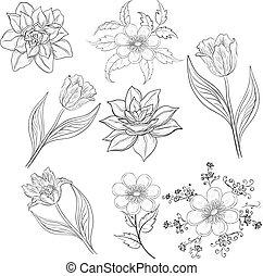 fleurs, ensemble, contour