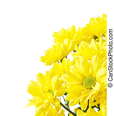 fleurs, espace copy