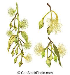 fleurs, eucalyptus, jaune