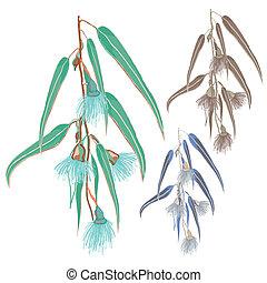 fleurs, feuilles, eucalyptus