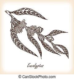 fleurs, feuilles, eucalyptus, illustration, vecteur, main, dessiné