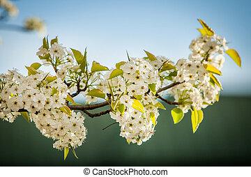 fleurs, fleur, arbres