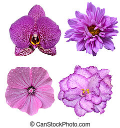 fleurs, fond, isolé, ensemble, quatre, blanc