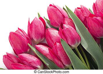 fleurs, fond, isolé, tulipes, blanc