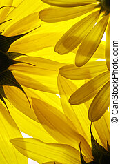 fleurs, fond jaune