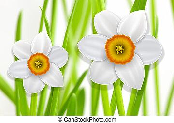 fleurs, fond