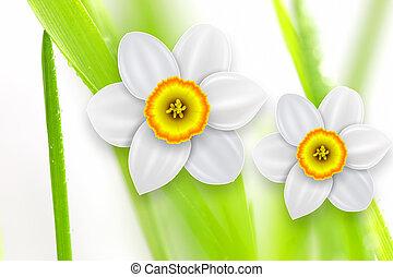 fleurs, fond, printemps