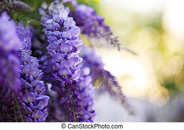 fleurs, fond, violet