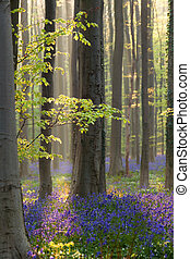 fleurs, forêt, lumière soleil, campanules
