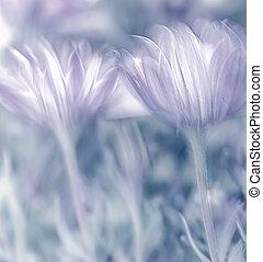 fleurs fraîches, printemps