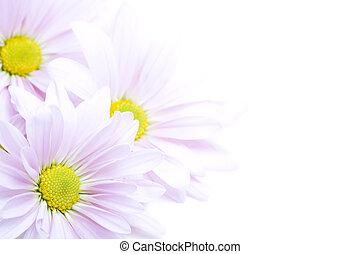 fleurs, frontière