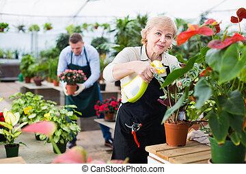 fleurs, greenhouse., substances, deux, jardinier, traitement