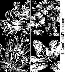 fleurs, hand-drawing., ensemble, arrière-plans, vector.