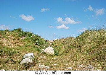 fleurs, herbe, dune, marram
