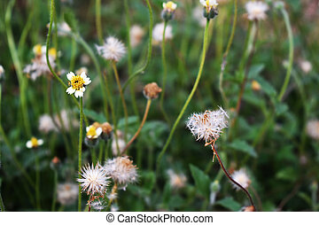 fleurs, herbe, fond