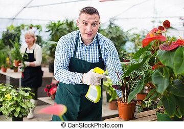 fleurs, homme, greenhouse., substances, jardinier, traitement