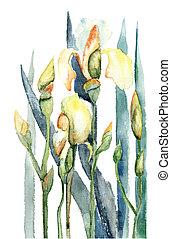 fleurs, iris, aquarelle, illustration